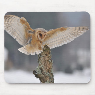 Barn owl landing to spike mouse pad