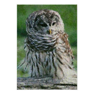Barred Owl Bird Poster Print