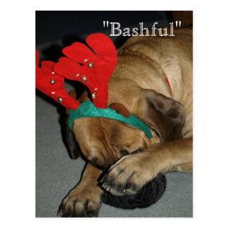 Bashful English Mastiff Dog With Reindeer Antlers Postcard