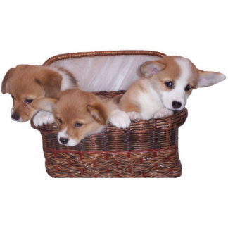 Basket of Corgis Standing Photo Sculpture