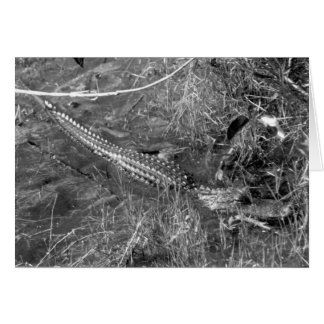 Basking Alligator, Florida Everglades, 1958 Card