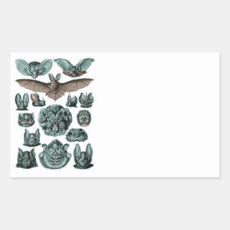 Bats by Ernst Haeckel Rectangular Sticker