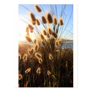 Beach wildflowers New Zealand coast Postcard