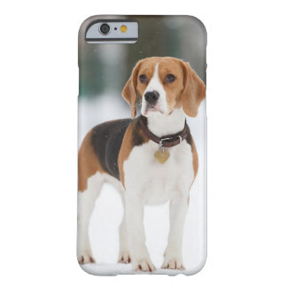 Beagle iPhone 6/6s Case