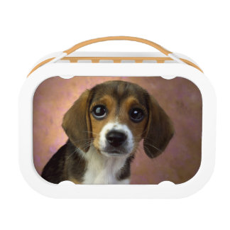 Beagle Lunch Box