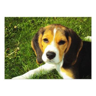 Beagle Puppy Invitation