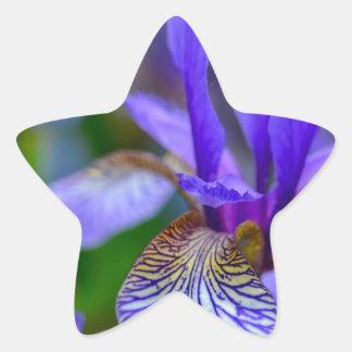 Bearded iris star sticker