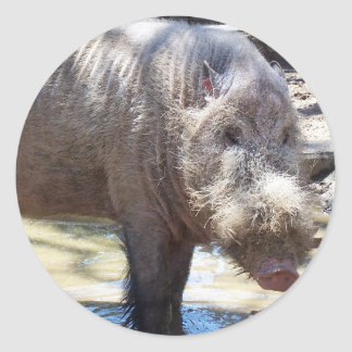 Bearded Pig Portrait Classic Round Sticker