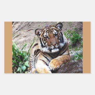 Beautiful and Majestic Bengal Tiger Photo Sketch Rectangular Stickers