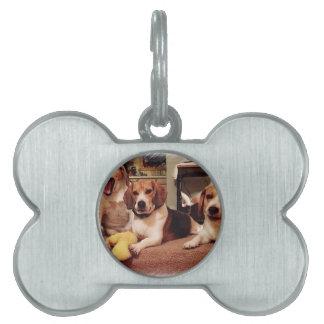 Beautiful Beagles Pet Tags