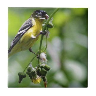 Beautiful Bird Small Square Tile