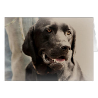 Beautiful Black Labrador Retriever Portrait Card