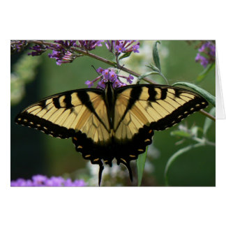 Beautiful Butterfly Note Card, envelopes included Card