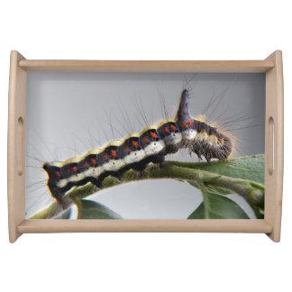 Beautiful Caterpillar Serving Tray