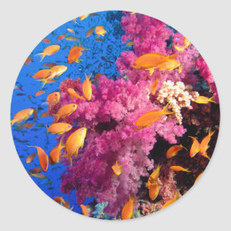 Beautiful Coral Reef Naturescape Classic Round Sticker