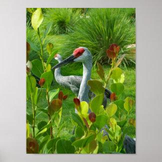 Beautiful Crane Bird Photograph Poster