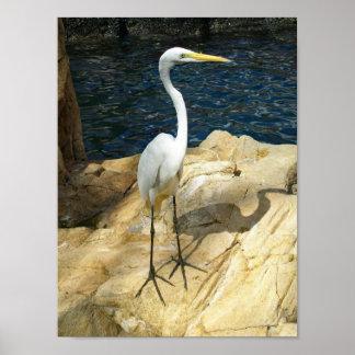 Beautiful Egreat Bird Photograph Poster