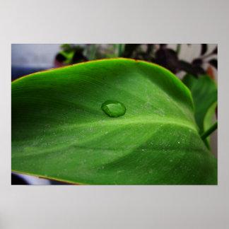 Beautiful Green Leaf Frame Poster