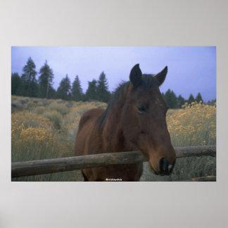 Beautiful Horse Print