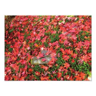 Beautiful Japanese Photo Autumn