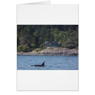 Beautiful Killer Whale Orca in Washington State Card