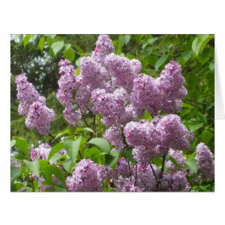Beautiful Lilac Bush Big Blank Card Greeting Card