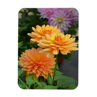 Beautiful orange dahlia flower fridge magnet