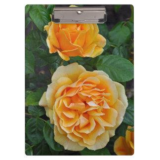 Beautiful orange roses clipboard