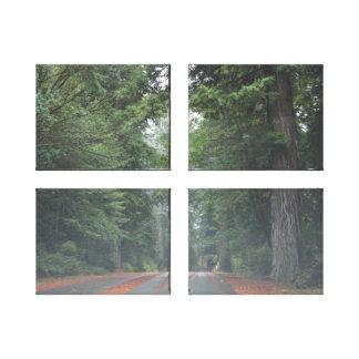Beautiful Oregon Redwood Canvas