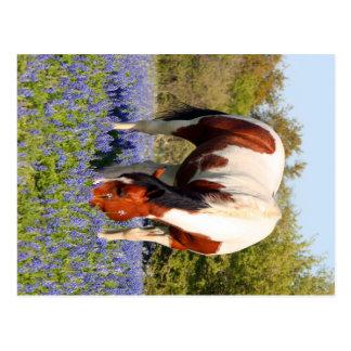Beautiful Paint Horse in a field of Blue Bonnets Postcard