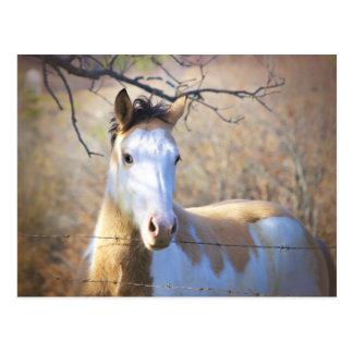 Beautiful Paint Horse Postcards