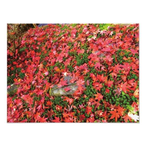 Beautiful Photo - Autumn in Japan - n1