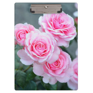 Beautiful pink roses clipboards