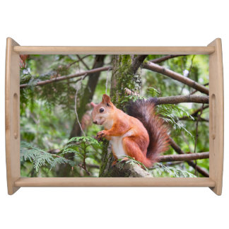 Beautiful Red Squirrel Photograph Serving Platter