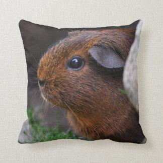 Beautiful Smooth, Gold Agouti, Guinea Pig Throw Cushions