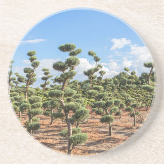 Beautiful topiary shapes in conifers coaster