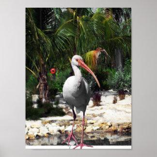 Beautiful  Tropical Bird Photograph Poster
