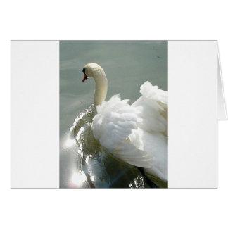 Beautiful white swan card