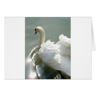 Beautiful white swan greeting card