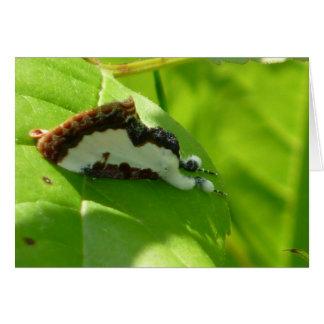 Beautiful Wood-nymph Moth Card