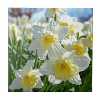 Beautiful yellow and white daffodils garden small square tile