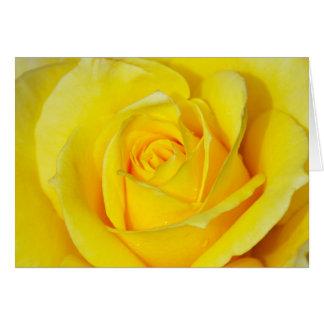 Beautiful yellow rose print greeting card