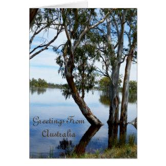 Beauty Of A Gum Tree Riverland Australia, Card