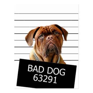 Bed dog - mastiff postcard