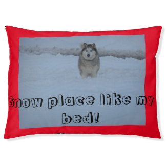 Bed for the snow husky