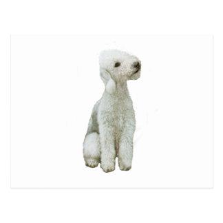 Bedlington Terrier (A) Postcard