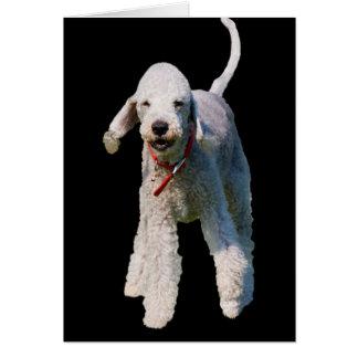 Bedlington Terrier dog photo blank greetings card