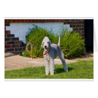 bedlington-terrier-full.png card