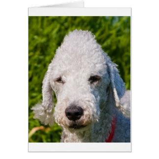 bedlington-terrier.png card