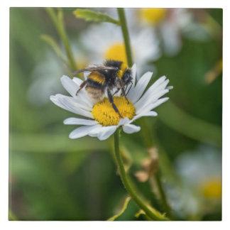 Bee on a daisy ceramic photo tile